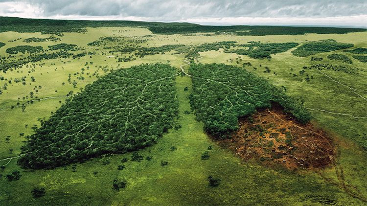deforestation-FR-1.jpg