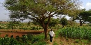 Abreha We Atsbeha - les orangers, avocatiers et manguiers sont bien a l'ombre grace a un acacia special- Photo: lemonde.fr
