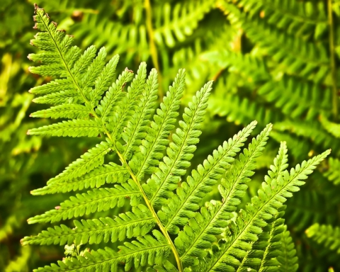fern-nature-green-plant-large