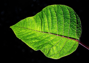 green-nature-leaf-73986-large