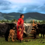 Solar panels save the nomads of Mongolia