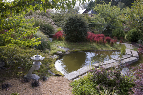 Pont passerelle en granit, Imperata cylindrica 'Red Dragon', Prunus incisa 'Kojo No Mai', Schoenoplectus