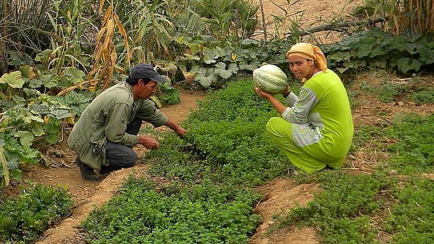 brachoua-permaculture-maroc